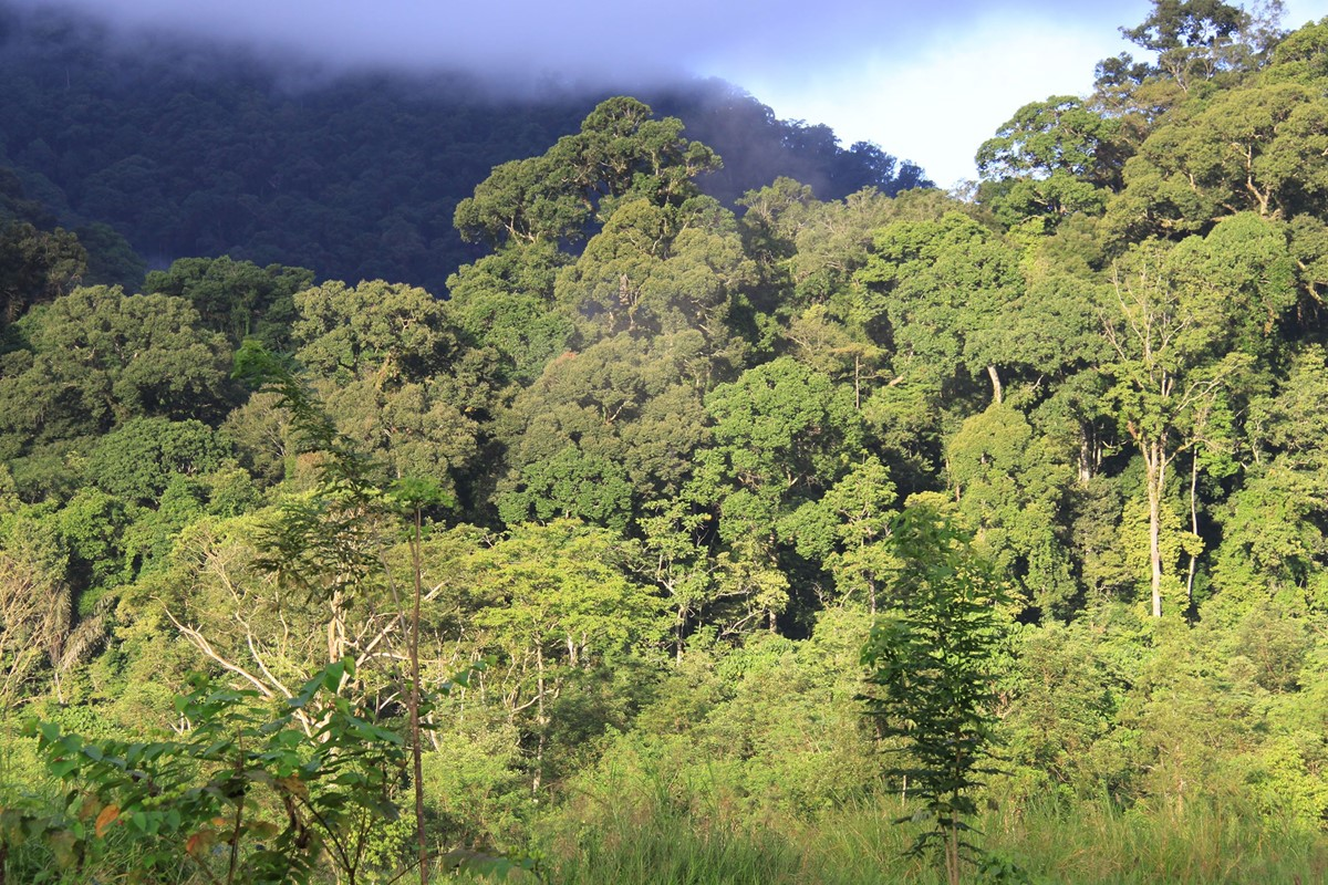 An Untouched Wilderness In The Indonesian Rainforest Another