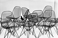 16. The World of Charles and Ray Eames. Wire Chair