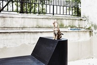GAIA THE BENGAL CAT ON PRONG BENCH FROM FURNITURE COLLECTION