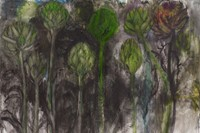 Botanical drawing by Jim Dine