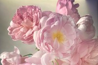 Nick Knight Roses Albion Barn Interview