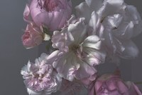 Nick Knight photographer Roses Albion Barn