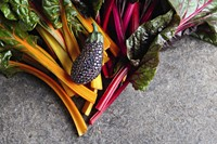 Aubergine and rainbow chard