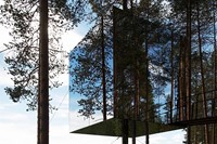 A Mirrored Treehouse