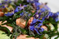 Smoked trout, borage flowers and samphire