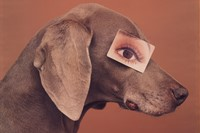 Eyewear II by William Wegman