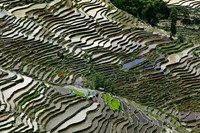 Rice Terraces, Western Yunnan Provin