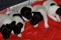 India at three weeks, Thanksgiving 2005. She is the one in t