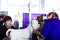 Westminster Kennel Club dog show 2014
