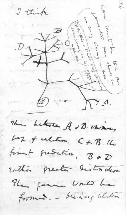 Darwin's Tree of Life, from Notebook B, 1837