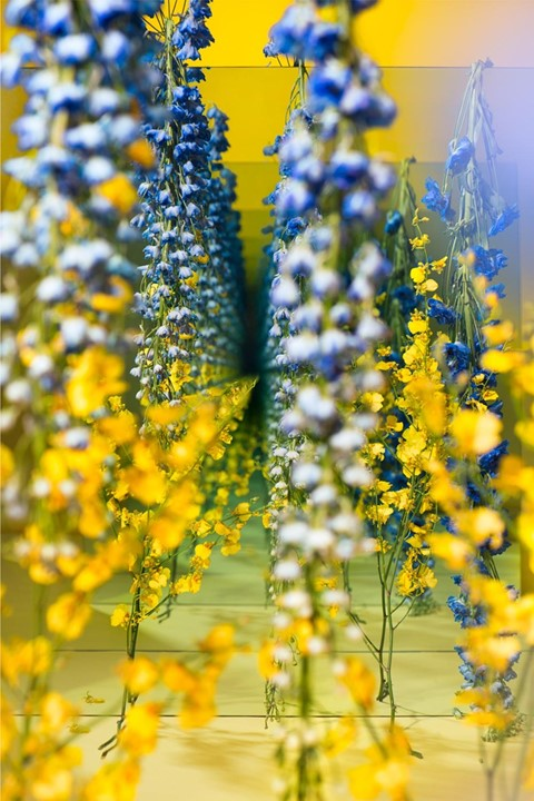 Yellow_and_Blue_web2