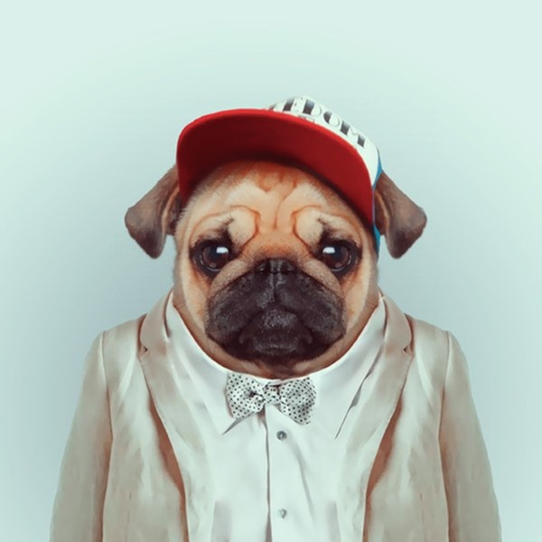 Pug from Zoo Portraits by Yago Partal