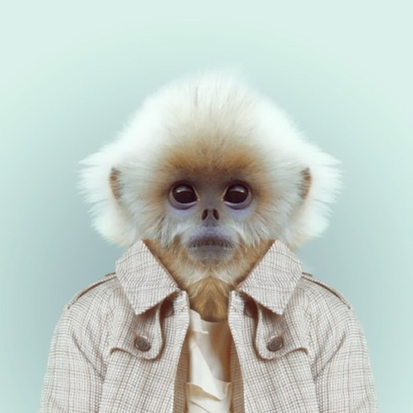Monkey from Zoo Portraits by Yago Partal