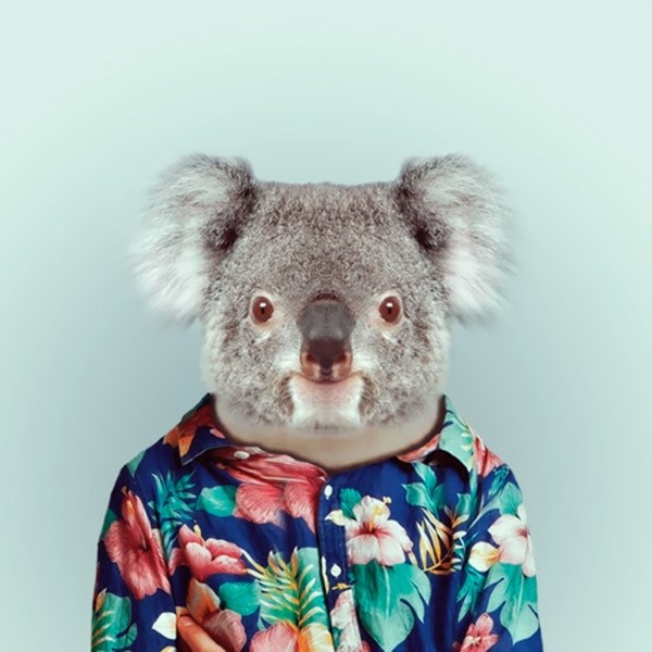 Koala from Zoo Portraits by Yago Partal