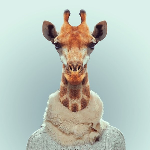 Giraffe from Zoo Portraits by Yago Partal