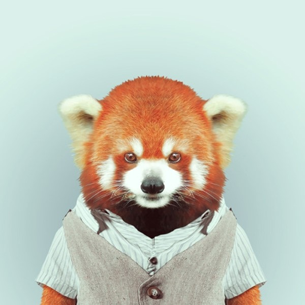 Red panda from Zoo Portraits by Yago Partal