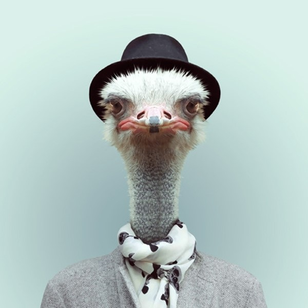 Ostrich from Zoo Portraits by Yago Partal