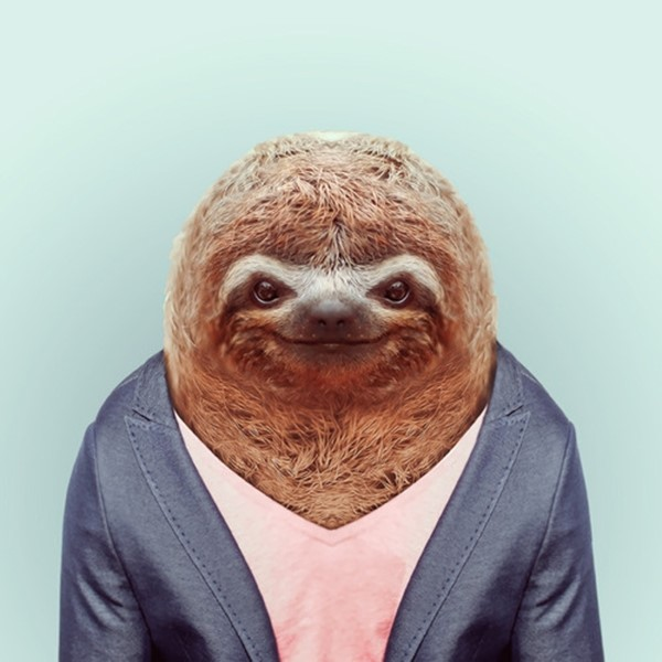 Sloth from Zoo Portraits by Yago Partal