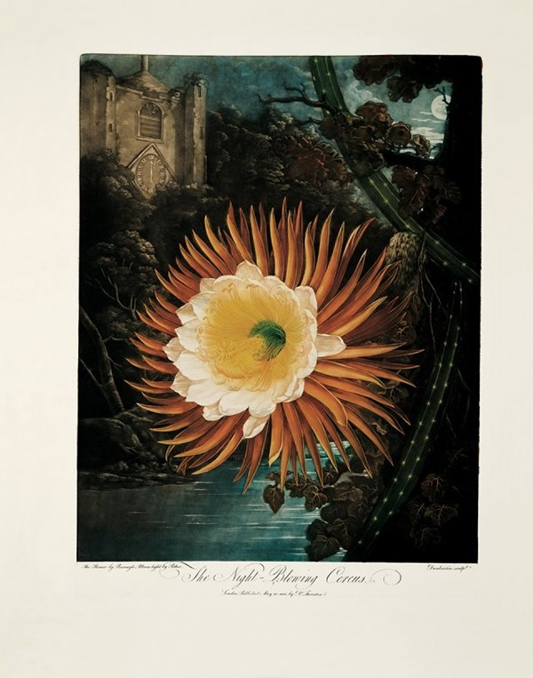 The Night-Blowing Cereus by Philip Reinagle and Abraham Peth