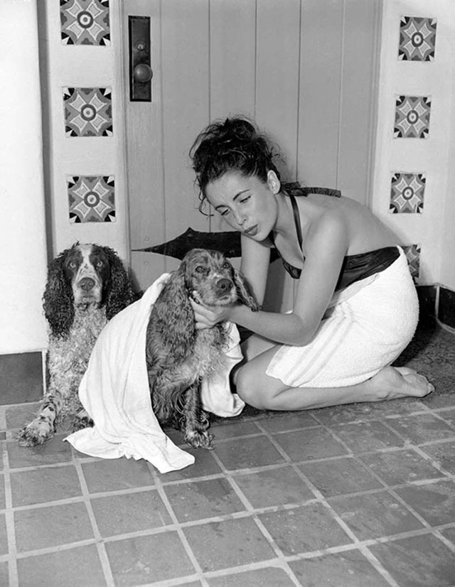 Elizabeth Taylor drying off her spaniels