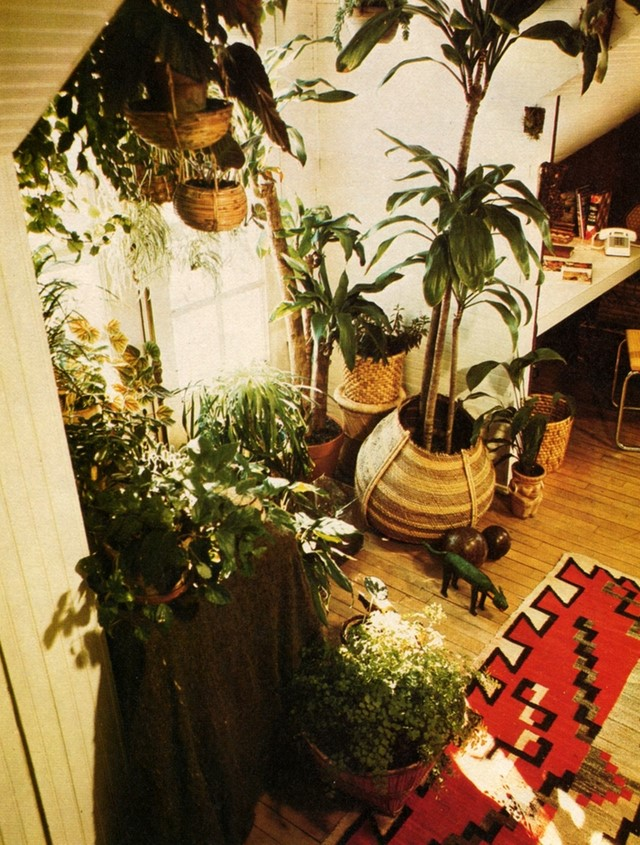 Miraculous House Plant Heaven Another Interior Design Ideas Clesiryabchikinfo
