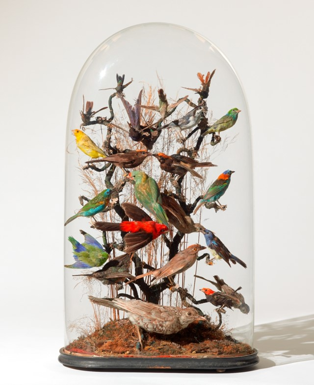Unknown maker, Montage display of 24 tropical birds, mid-19t