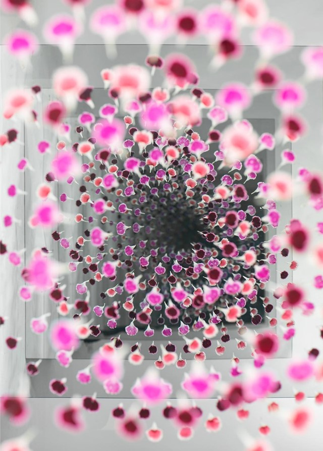 Gray_and_Pink_web2