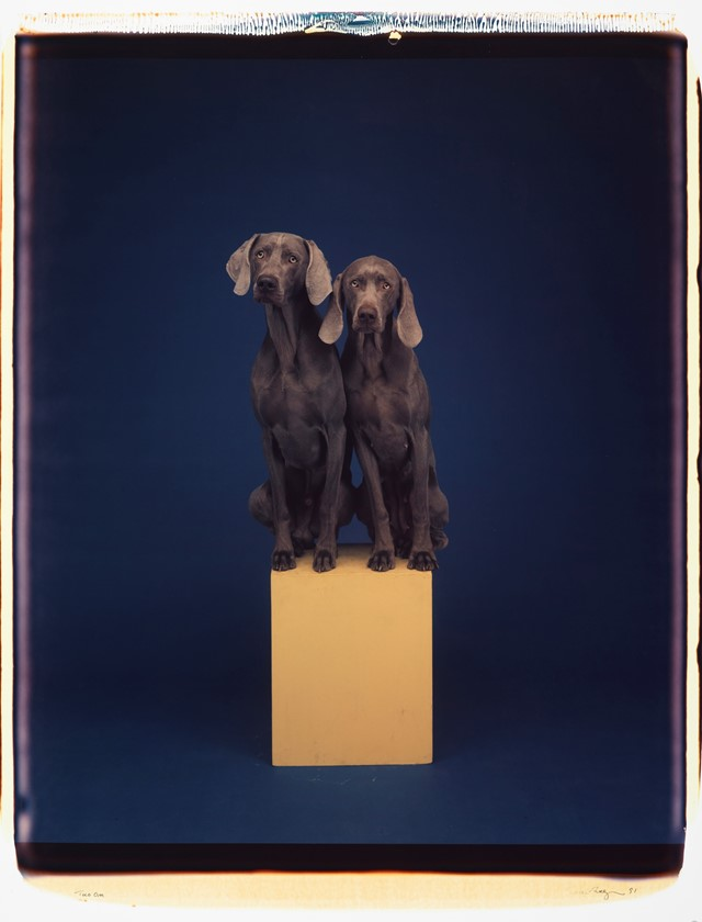 Two On by William Wegman