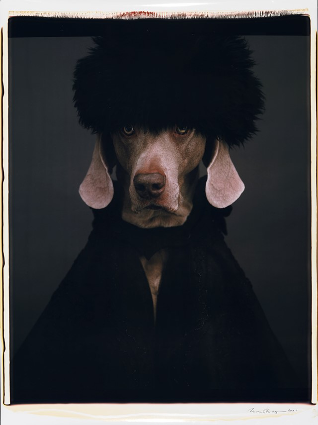 Igor or Ivan by William Wegman