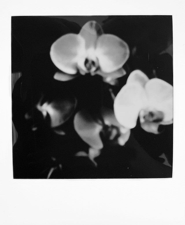 Emmi and the Orchids