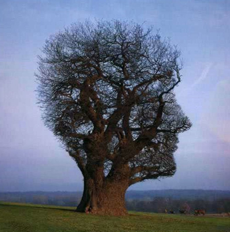 Weird and Wonderful Trees | AnOther