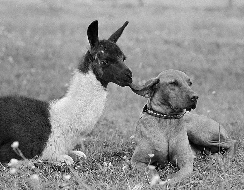 Ear Nibble, 1967