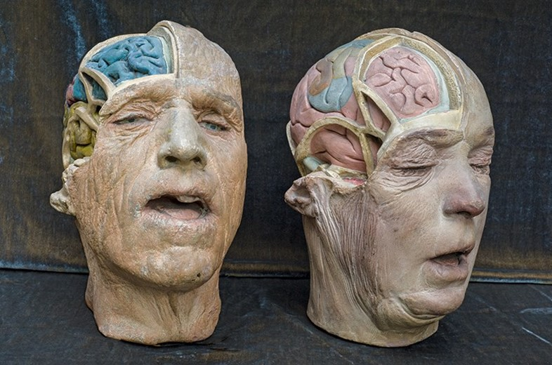 Two Plaster Medical Heads
