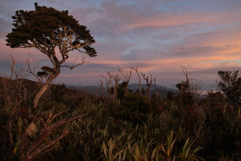 Sunrises_-_Mount_Leuser_National_Park