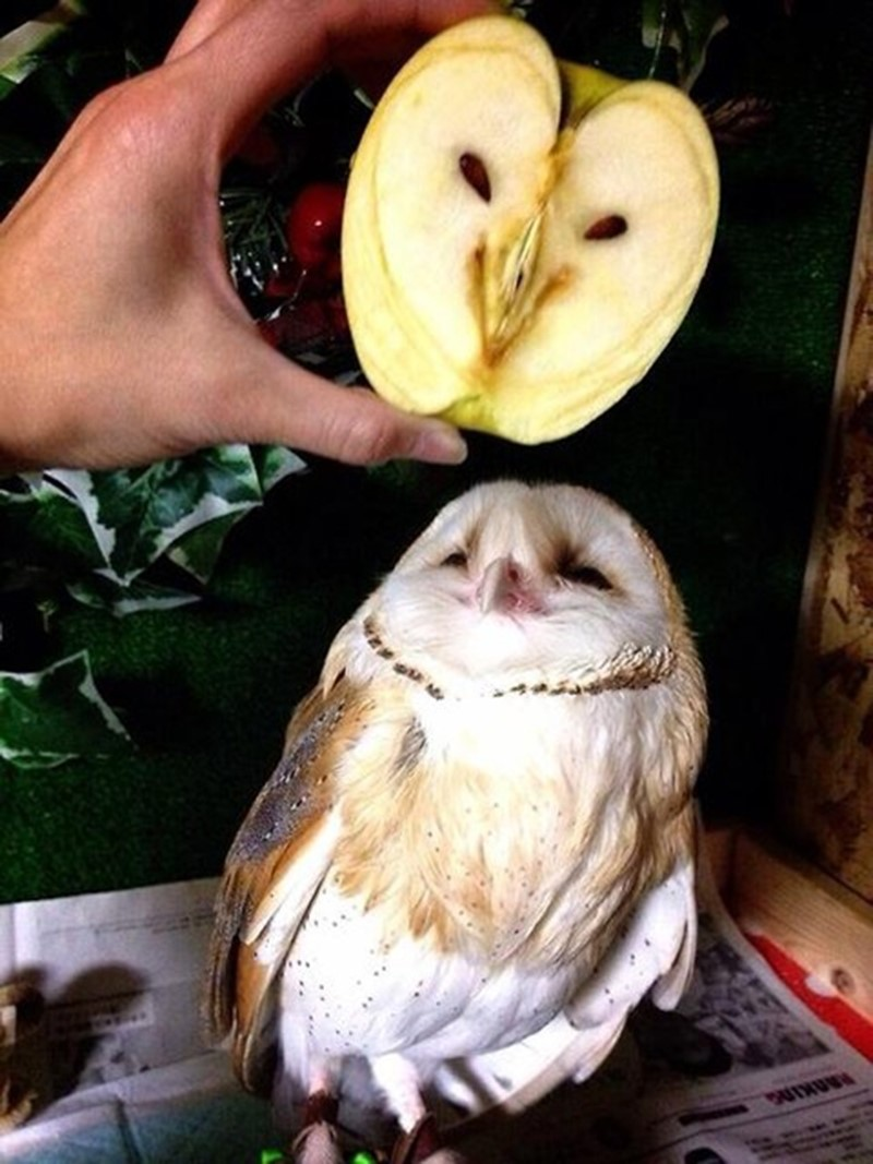 Apple of my Owl   AnOther