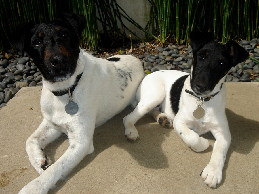 Angus (left) and India (right)