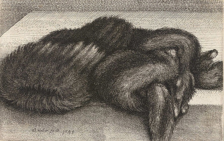 Wenceslaus Hollar's striped fur muff (State 2) etching