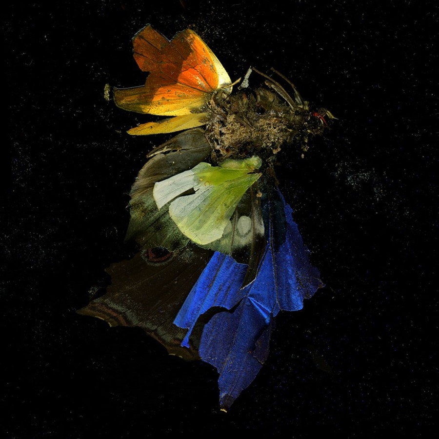 Insecticide, 2009, by Mat Collishaw